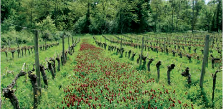 La biodiversité du vignoble de Bordeaux