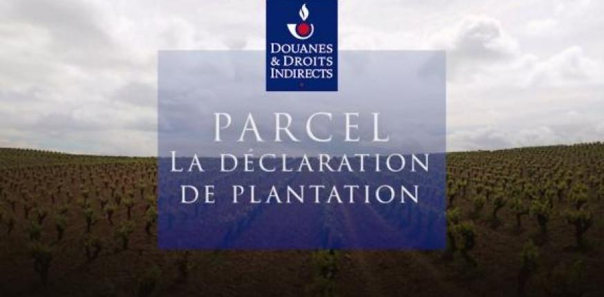 PARCEL : votre déclaration en ligne des arrachages et plantations