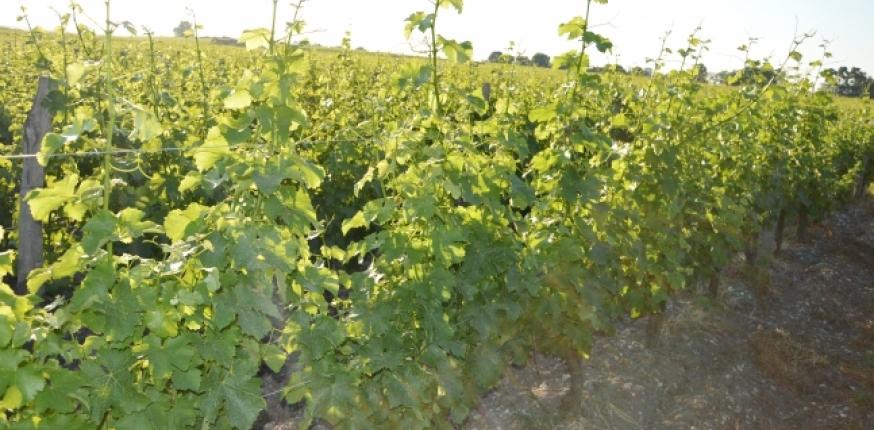 Prix des vignes et terrains à vignes AOP en Gironde en 2017 (€/ha)