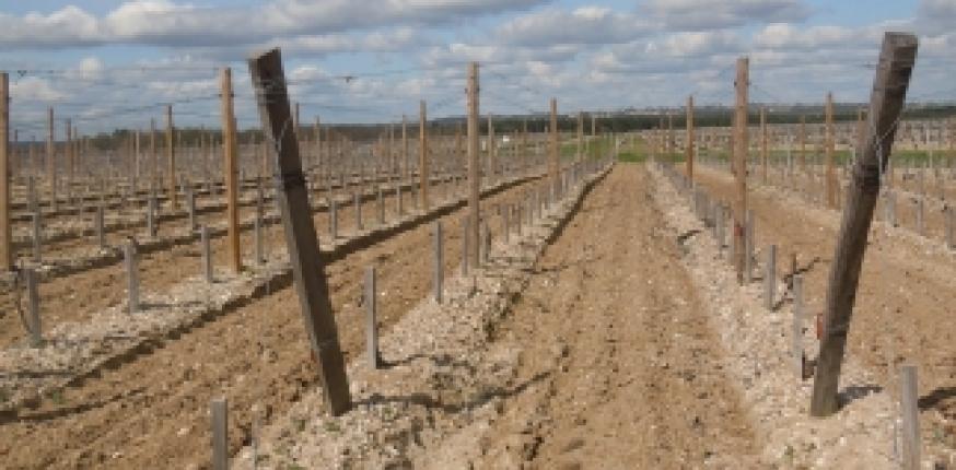 Restructuration du vignoble : tout savoir sur le plan collectif 2018-2021