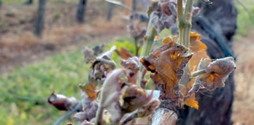 Fermages et pertes de récolte
