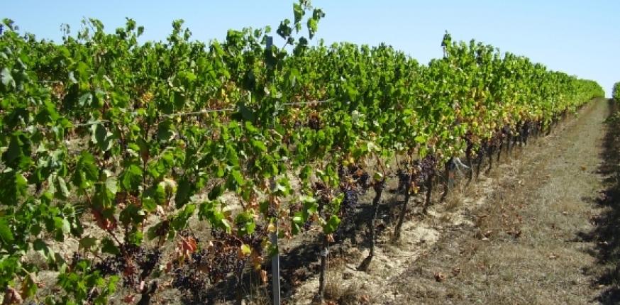 Plan national de lutte contre le dépérissement du vignoble