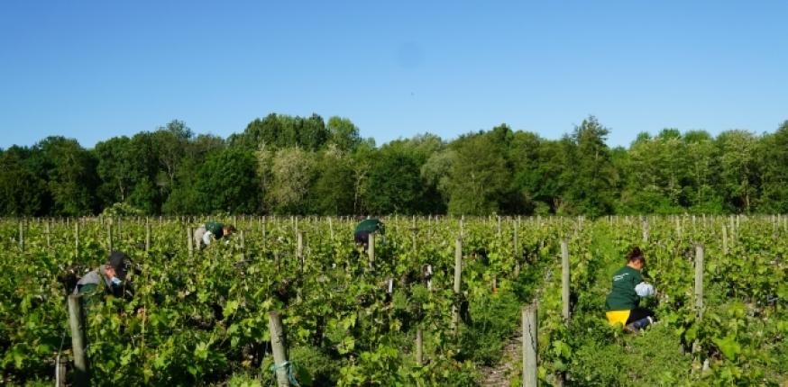 La viticulture, grande oubliée du plan de relance de l'État